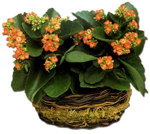 El cuidado de las plantas y el jardin las plantas con - Plantas de flores para interiores ...